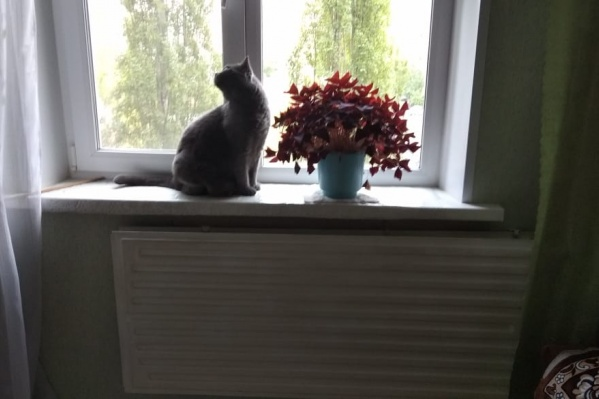 В этой квартире не мерзнет только кот, только потому что в нем семь килограмм жира и тонна шерсти