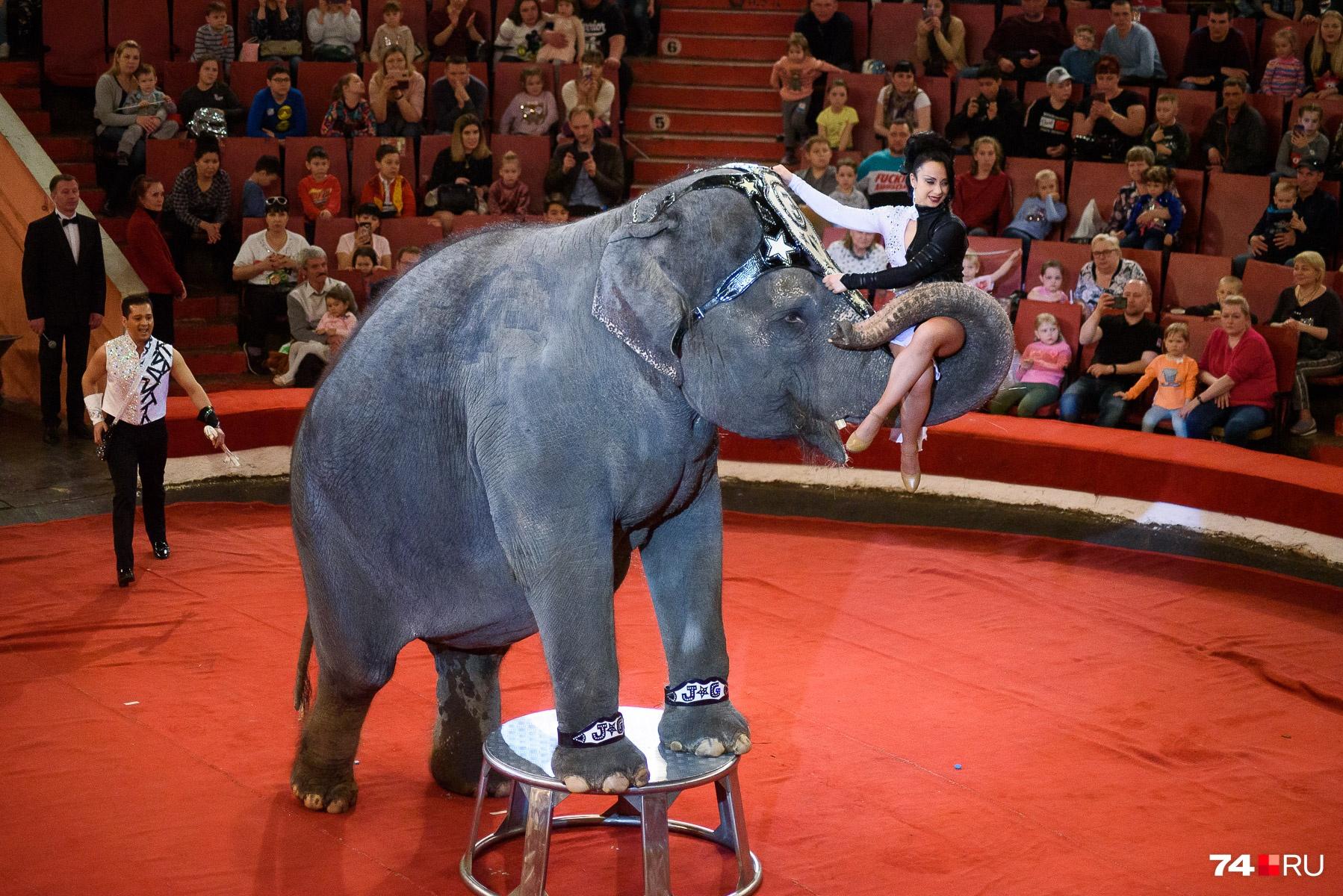 До 1970-го года, когда вИндии принят закон озапрете вывоза слонов
