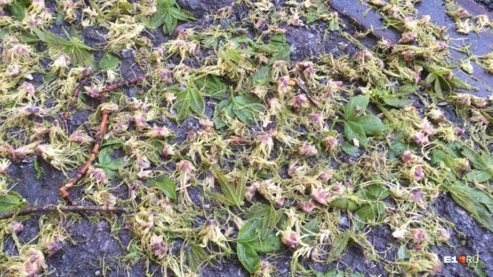 Во дворах были сугробы из ледышек, а зеленые почки скосило градом: оцениваем последствия грозы