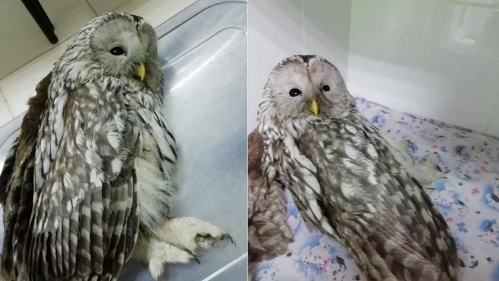 В строительном котловане спасли присыпанную землей сову