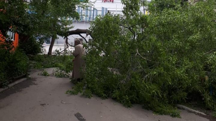 Перепись поваленных деревьев: на Екатеринбург обрушился сильный ветер с дождём