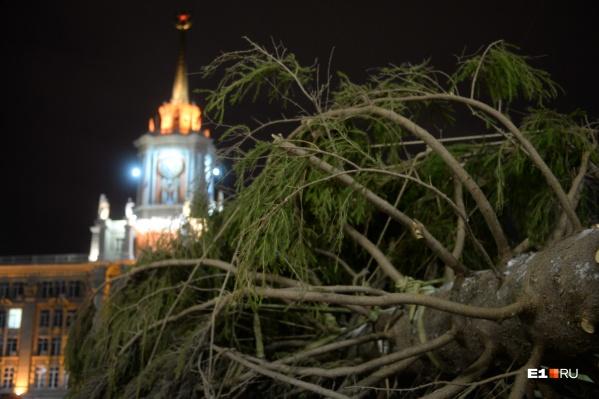 В этом году в ледовом городке будет стоять настоящая ёлка