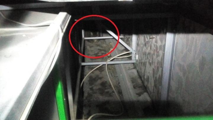 Екатеринбуржец вытащил кошку, которая упала с балкона и застряла между стеной дома и сайдингом