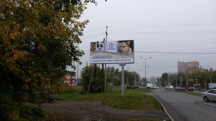 «Завести друга ничего не стоит». На улицах Перми появилась социальная реклама муниципального приюта