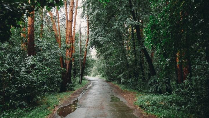 Право на аренду: как заросший старый парк делят между собой тюменские власти и крупный застройщик