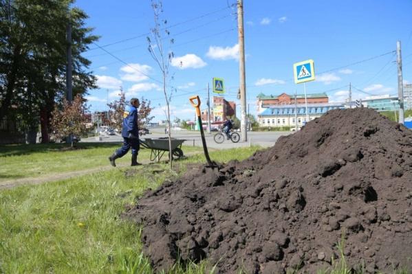 В 2018-м в Челябинске высадят пять тысяч деревьев