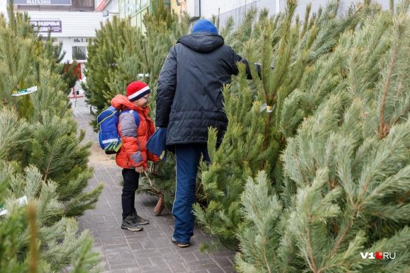 Ажиотаж на елочных базарах начнется за неделю до Нового года
