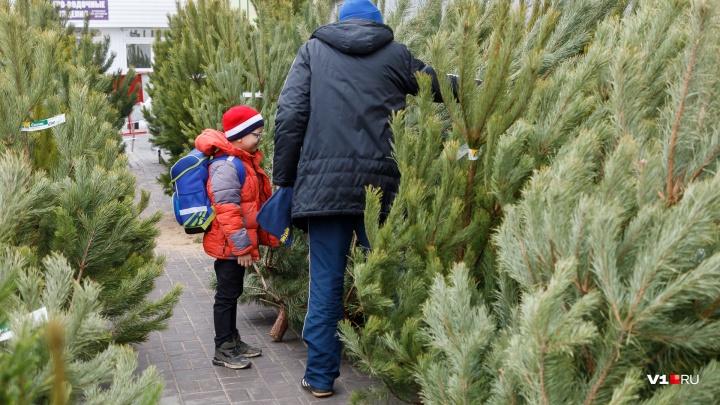 «Ели с прилавка мы не выбрасываем»: когда, где и за сколько купить новогоднее дерево в Волгограде