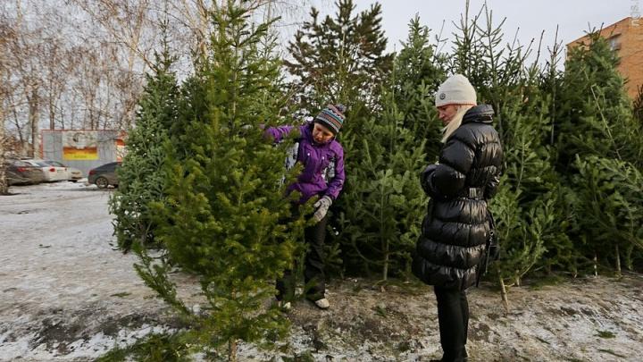 Карта: где в Красноярске откроют официальные базары с продажами живых елок