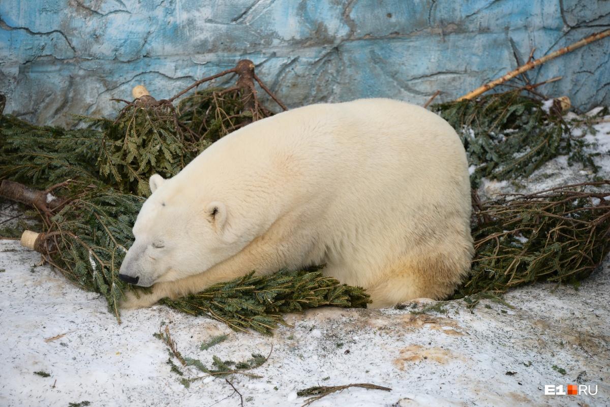Белый медведь Умка