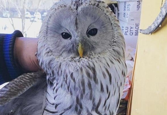 5 часов ждала помощи: на просьбы челябинки, поймавшей на балконе сову, отозвались лишь зоозащитники