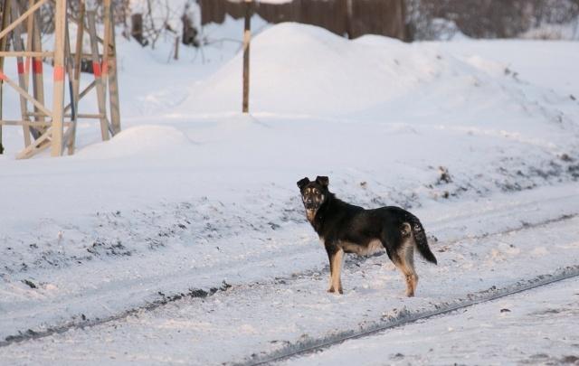 В Башкирии ночью похолодает до −20 градусов
