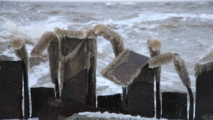 Роспотребнадзор проверил содержание радионуклидов в рыбе из Белого моря