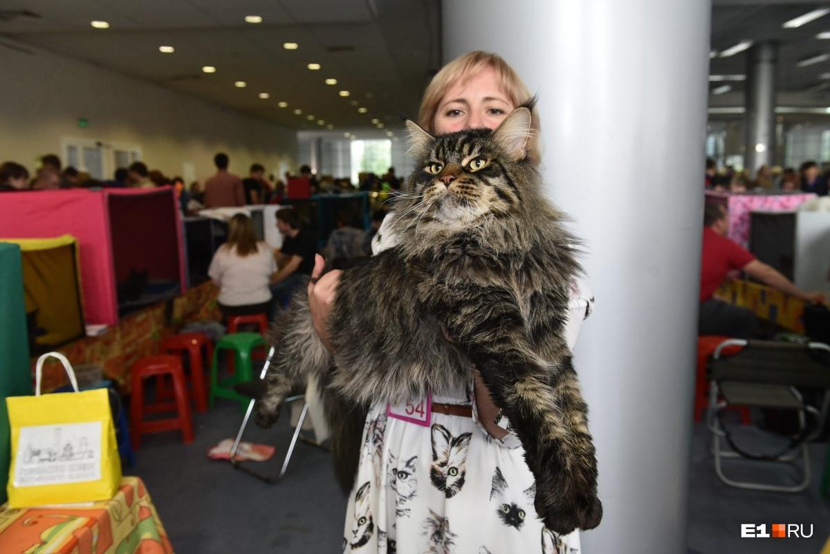 Размеры некоторых котиков впечатляют