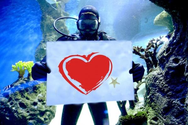 Водолазы готовятся плавать с табличками в аквариумах океанариума 14 февраля