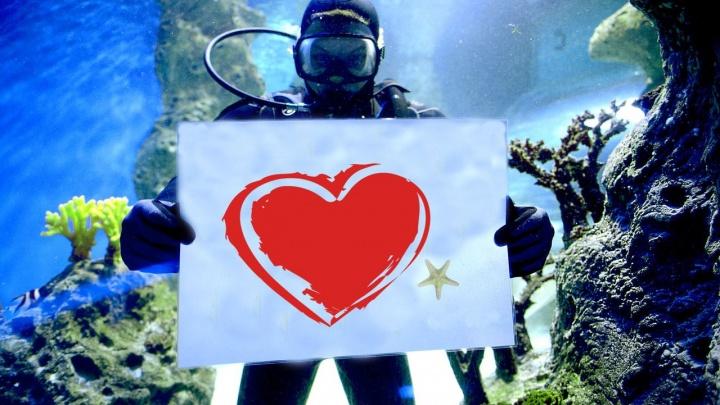 В аквариумы дельфинария запустили водолазов с плакатами о любви