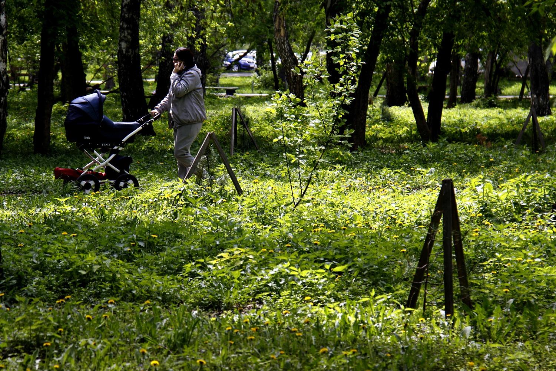 В «Березовой роще» можно почувствовать себя почти в лесу