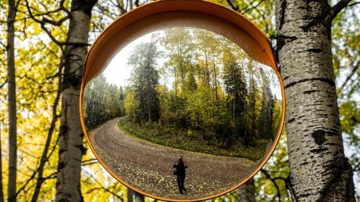 Осень золотом укутала окрестности Красноярска. Любуемся самыми яркими кадрами
