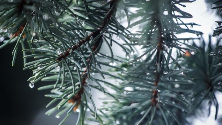 Волгоград после дождя: смотрим яркие фото ожившей природы