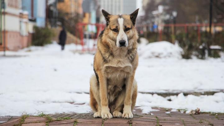 Госдума ужесточила наказание за издевательства над животными