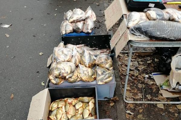 Роспотребнадзор не рекомендует тюменцам покупать рыбу в местах несанкционированной торговли, так как неизвестно, откуда она у продавцов