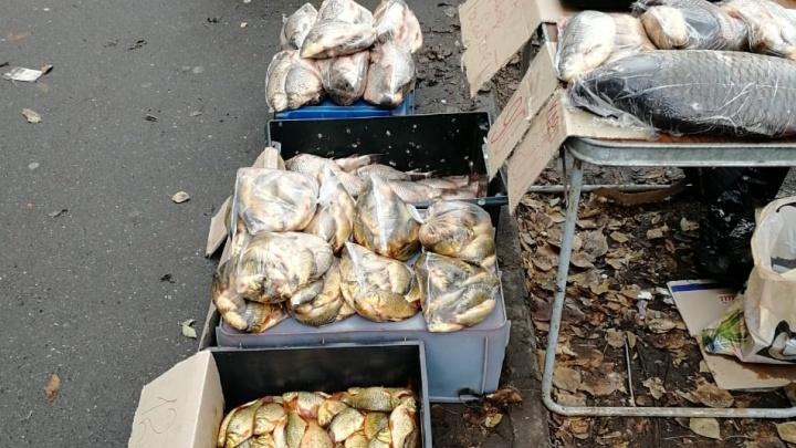 Рыбу из зараженного гаффской болезнью озера поставляли в Тобольск