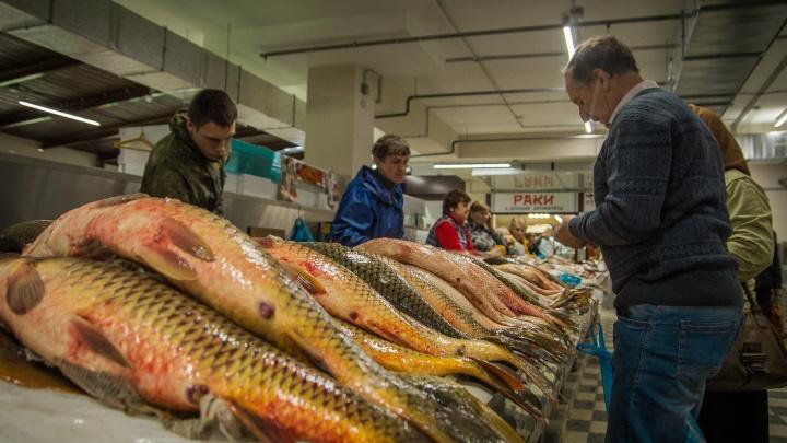 В Ростовской области рядом с крупными городами построят базы с живой рыбой