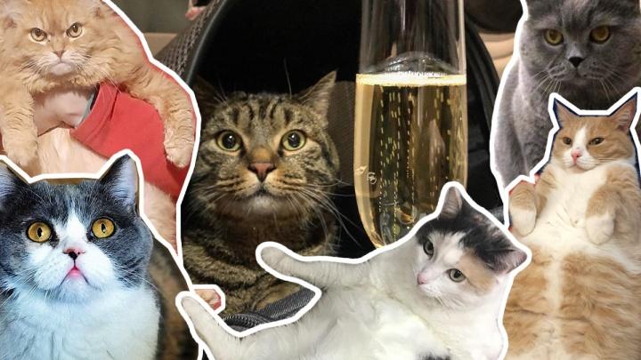 Выбираем самого толстого котика Новосибирска: 50 упитанных кандидатов (голосование)