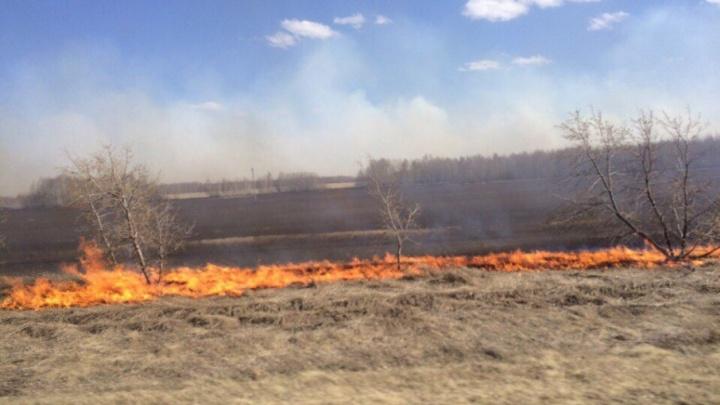 Штрафы будут максимальными: в Кургане из-за ветра и беспечности людей полыхало полсотни пожаров
