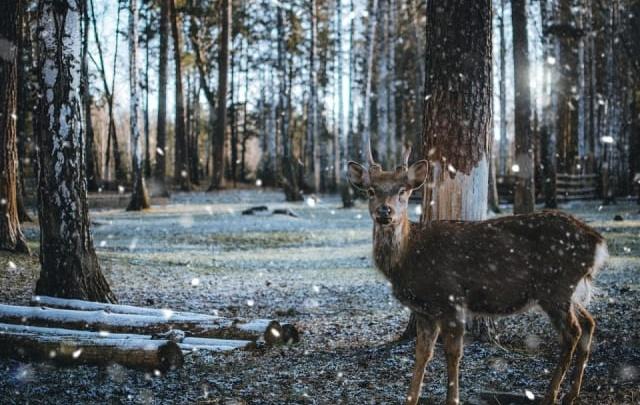 Это же Бэмби! Читатели Е1.RU выбрали лучшее фото декабря