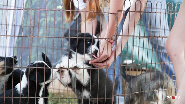 Самый длинный хвост или... уши: в челябинском парке устроили шоу для любителей собак и их питомцев