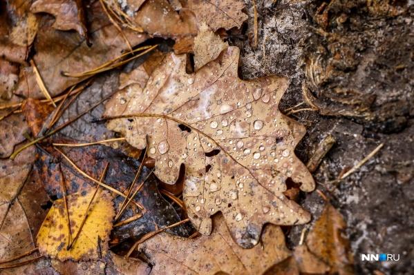 Капли дождя на дубовых листьях — что может быть лучше?
