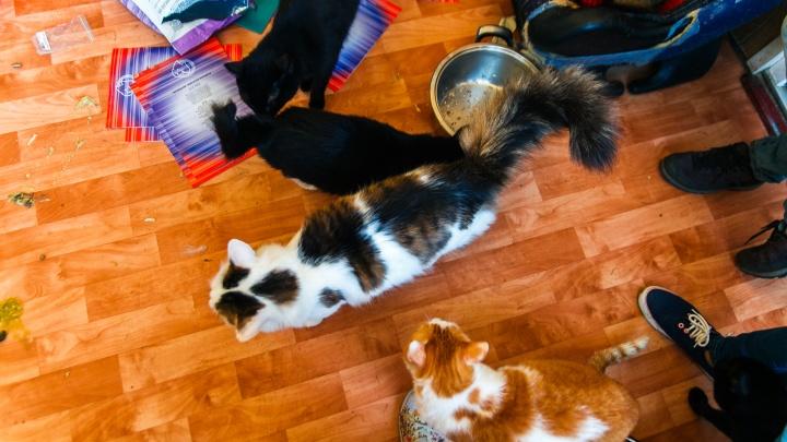 30 кошек и вонь: в Тюмени приставы забрали ребенка из квартиры мамы-кошатницы
