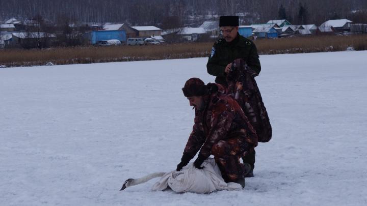 В Башкирии спасли раненого лебедя, он один сидел на тонком льду. Стая ждала его день, но улетела