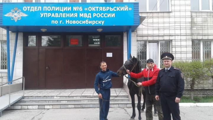 Житель Новосибирска забрал откормленного коня-беглеца из отдела полиции