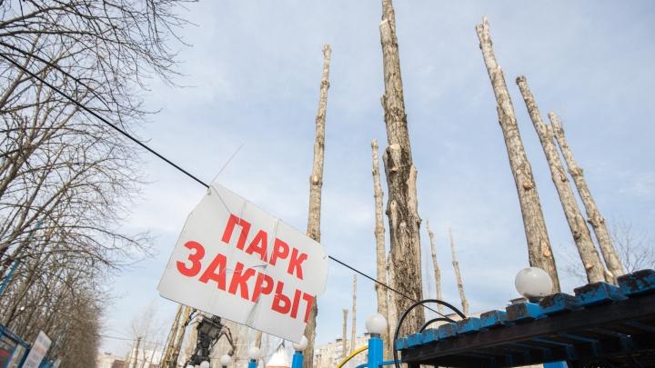 В парке «Сказка» массово спилили ветки деревьев