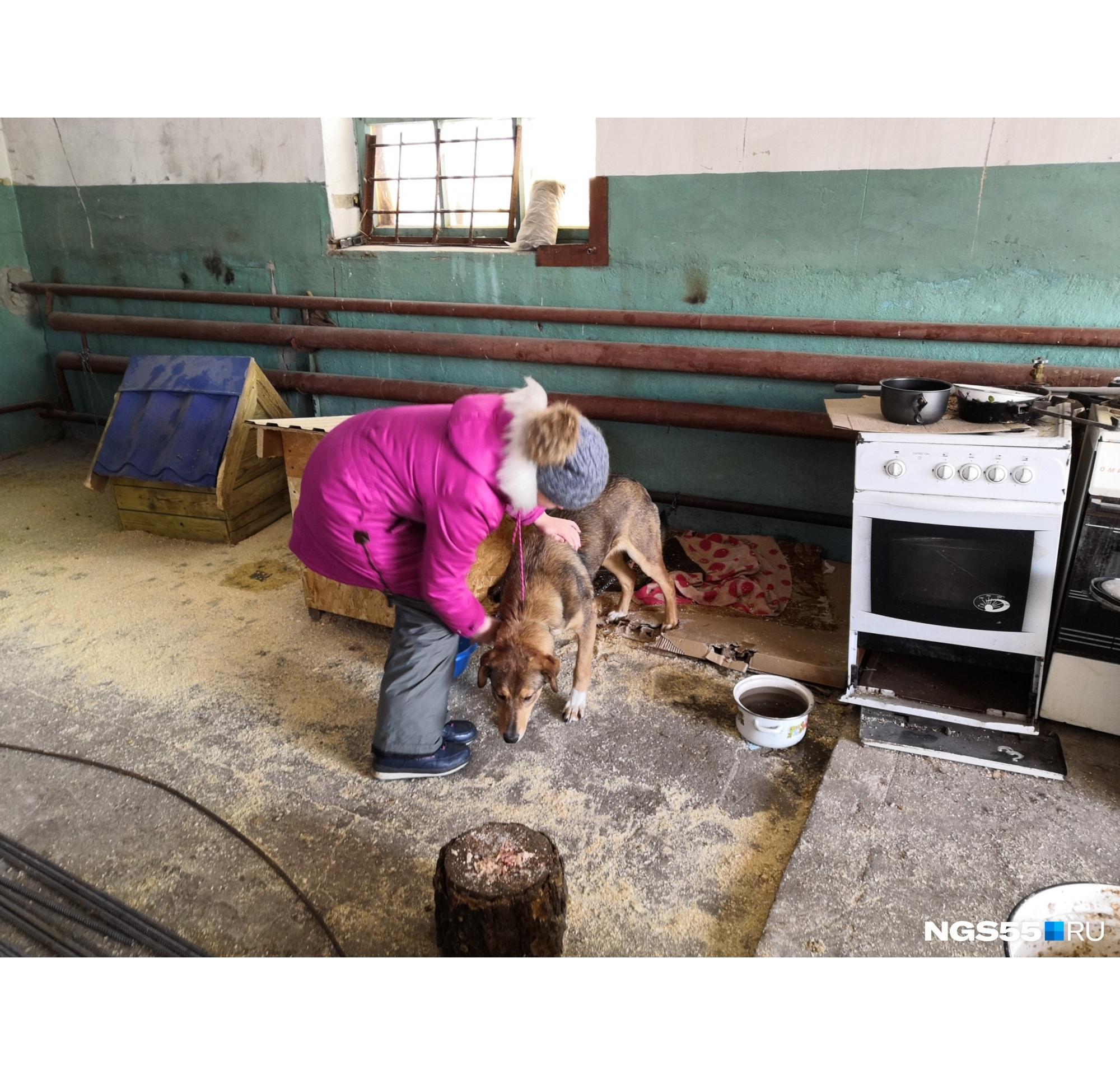 В САХе живёт множество больных собак