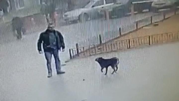 «Как бы их переманить поближе к мэрии?»: стая собак у ТЦ «Ворошиловский» напала на женщину с ребенком