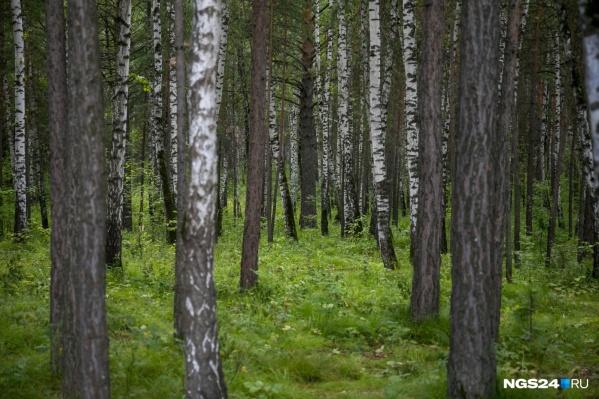 Семья ушла в лес за шишками