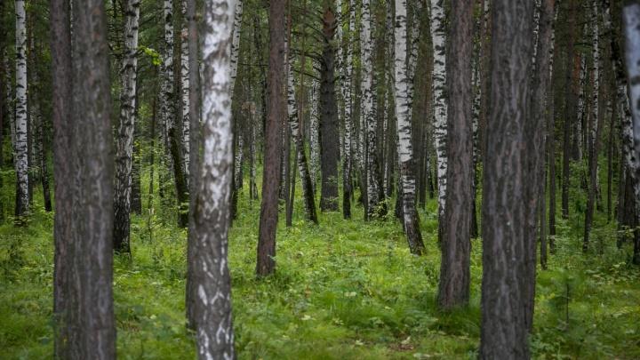 Семья с ребенком ушла собирать шишки в лес и заблудилась