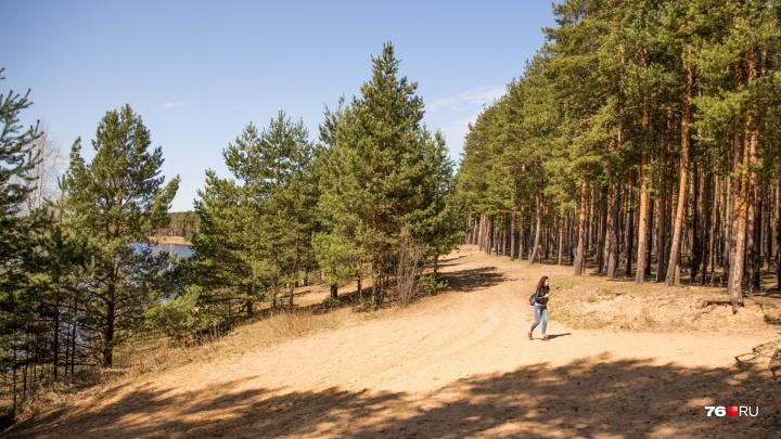 «Это будет сказка»: в Ярославле хотят создать парк с рекой и озёрами