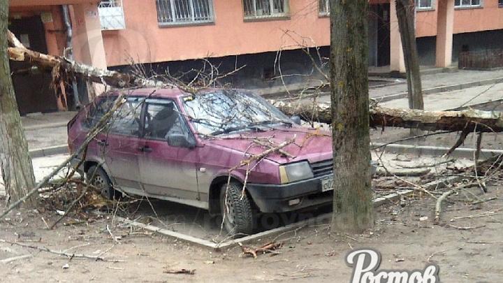 Ветер сносит крыши и ломает деревья: что сейчас происходит в Ростове из-за непогоды