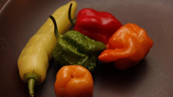 В 10 раз острее чили: в Новосибирске вырастили и съели экстремально острый перец
