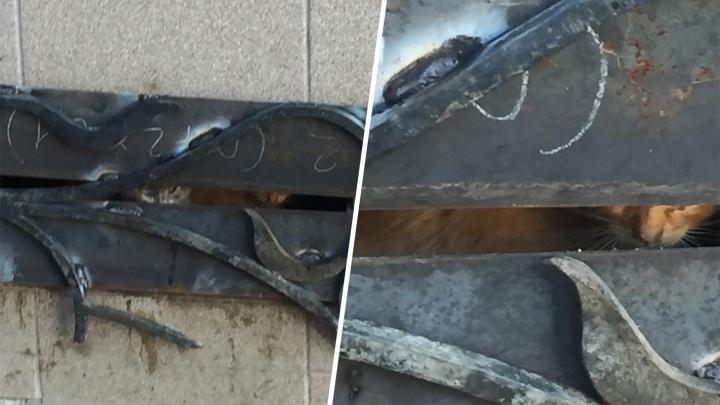 В Самаре нескольких котят замуровали в подвале жилого дома