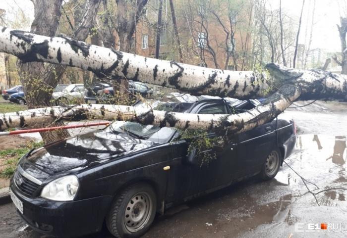 Поваленные сильным ветром деревья в Екатеринбурге не редкость