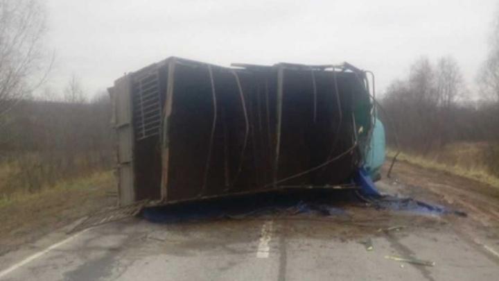 В Ярославской области перевернулась машина с телятами