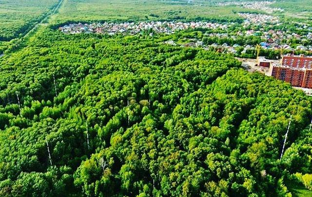 «Хотим лес и парк»: жители «Новой Самары» просят запретить вырубку деревьев