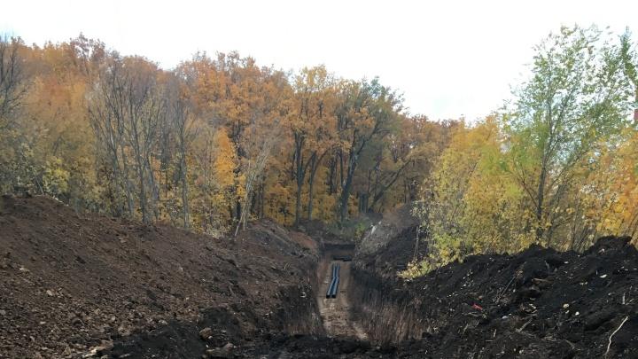 «Создают коридор в лесу»: для чего вырубают деревья на 18 км Московского шоссе