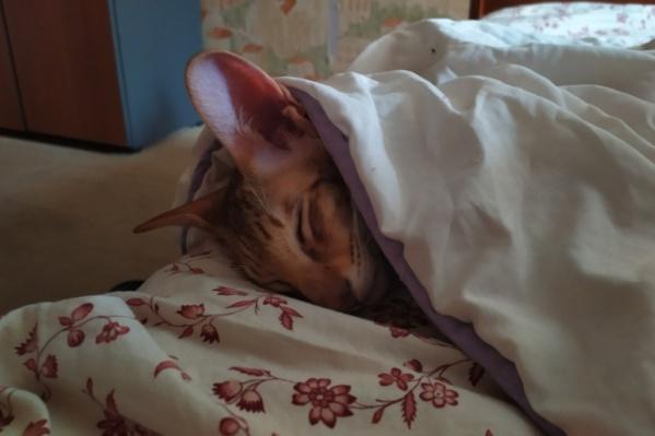 Любимый котик принес хозяину победу в конкурсе на лучшее фото в сентябре