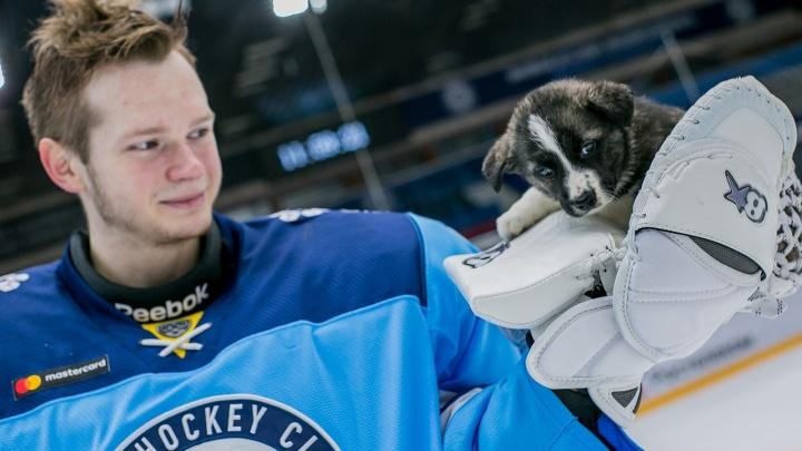 Щенки на льду: хоккеисты «Сибири» снялись с собаками из приюта (ничего милее мы еще не видели)
